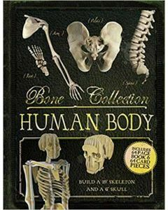 Bone Collection: Human Body (Ages 7+)