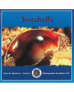 Marine Life: Seashells