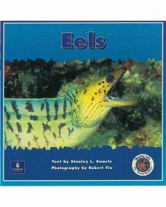 Marine Life: Eels