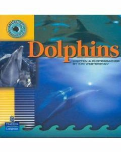 Antarctic Experience: Dolphins