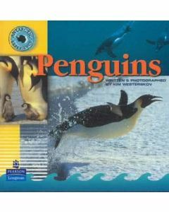 Antarctic Experience: Penguins