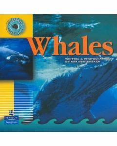 Antarctic Experience: Whales