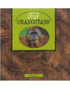 World of Animals : Orangutans